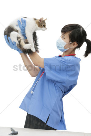 Domesticated animal : Female veterinarian holding up cat against white background