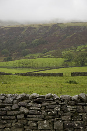 Land : Fields in yorkshire dales yorkshire england