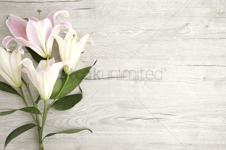 Blank : Flat of wooden background and lilies