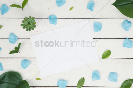 Blank : Flatlay of leaves and petals with blank paper