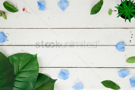 Background : Flatlay of white background with plants and leaves