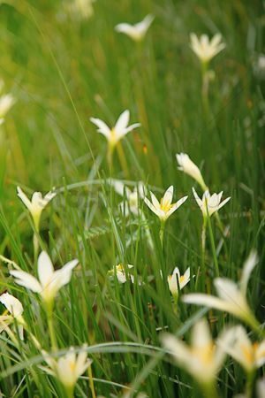 Grass background : Flowers and grasses