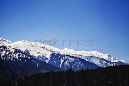 Cold temperature : Forest with snow covered mountains in the background  manali  himachal pradesh  india