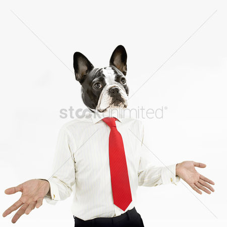 Bulldog : French bulldog business man with hands extended