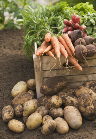 Organic : Fresh vegetables in crate