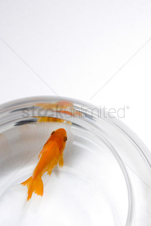 Pain : Goldfish in a fishbowl