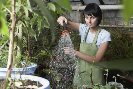 Greenhouse : Greenhouse worker watering plants