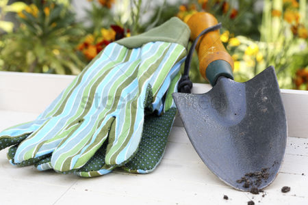 Hand : Hand trowel and gardening gloves