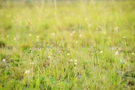 Flower : Meadow with wildflowers