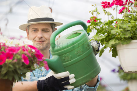 Greenhouse : Middle-aged man watering flower plants in greenhouse