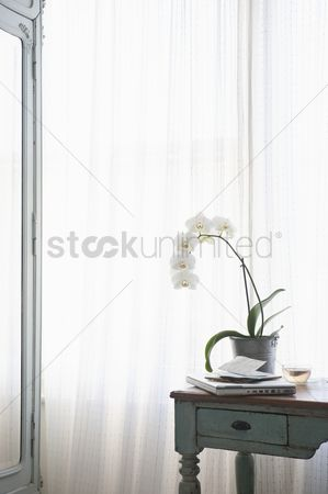 Houseplant : Orchid and laptop with letters on table at window