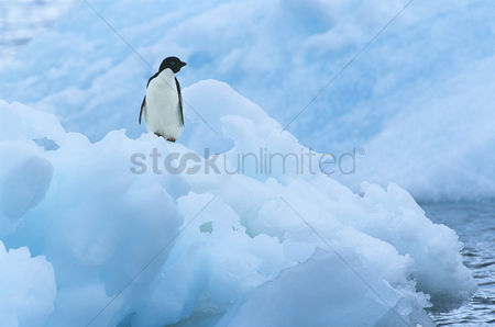 Winter : Penguin on iceberg