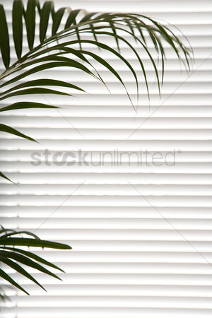 Interior background : Plant against blinds