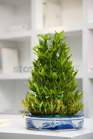 Houseplant : Plant in an office