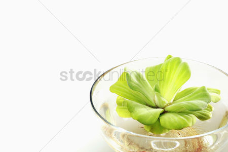 Bowl : Plant with roots in a bowl of water