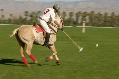 Match : Polo player leaning down from polo pony advancing ball on polo field during match side view