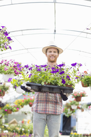 Greenhouse : Portrait of happy gardener holding flower pots in crate at greenhouse