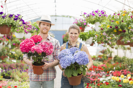 Greenhouse : Portrait of smiling gardeners holding flower pots at greenhouse
