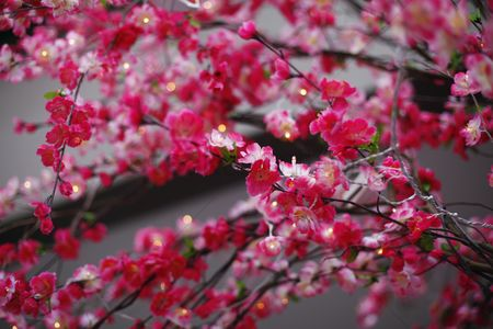 Background : Red plum blossoms