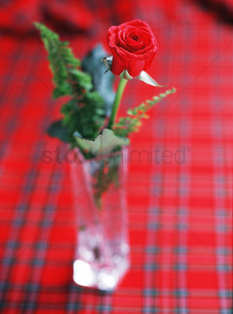 Interior : Red rose in clear glass