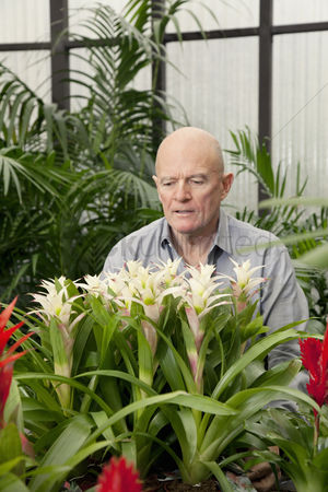 Greenhouse : Senior man in botanical garden center