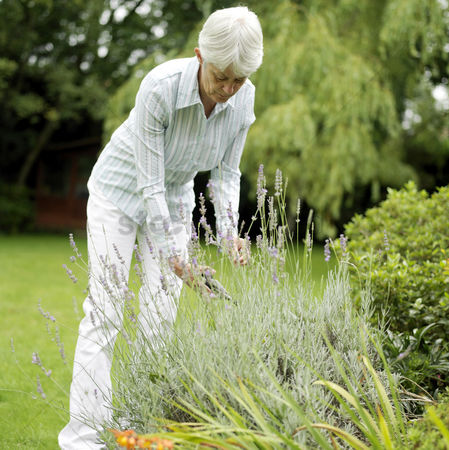 Adulthood : Senior woman gardening