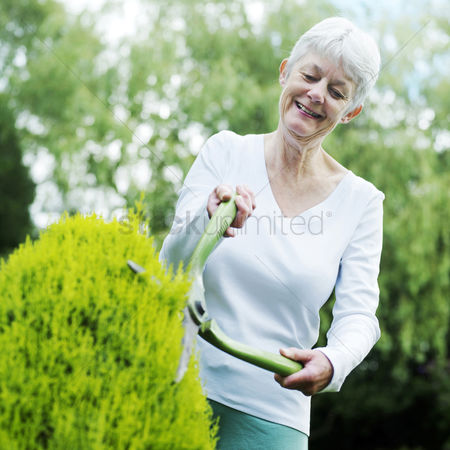 Aging process : Senior woman pruning bush with hedge clippers