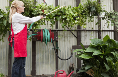 Greenhouse : Side view of senior female gardener spraying pesticide on plants in garden center