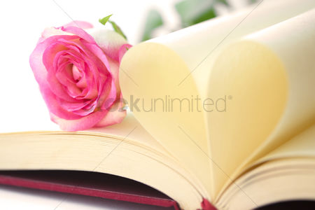 Blank : Single rose in opened book