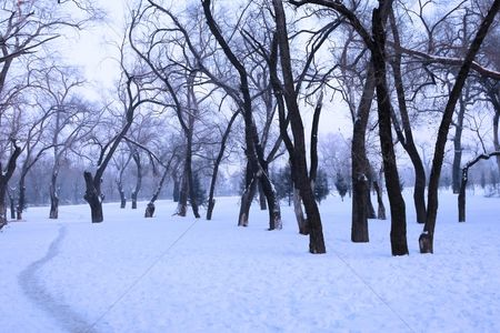 Cold temperature : Snow covered trees