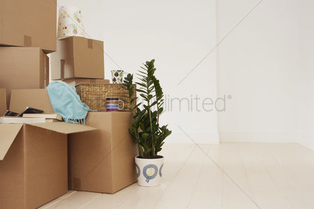 Houseplant : Stacked cardboard boxes