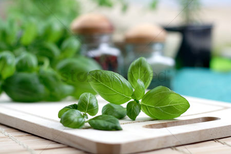 Background : Studio shot of fresh basil