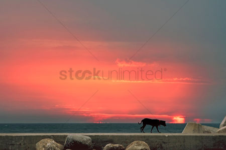 Dogs : Sunset with a silhouette of a dog