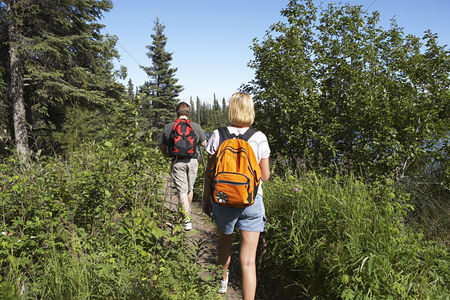 Trees : Usa alaska couple walking along trail in forest