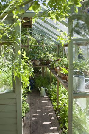 Tidy : View into sunlit greenhouse