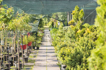 Collection : Walkway at plant nursery