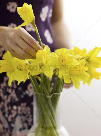 Easter : Woman arranging daffodils in vase