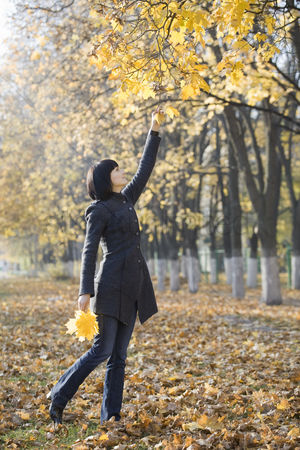 Collection : Woman collecting leaves from tree in park