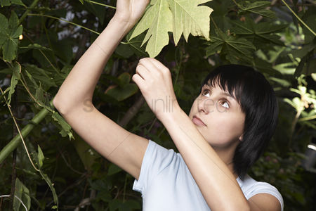Greenhouse : Woman examining leaf