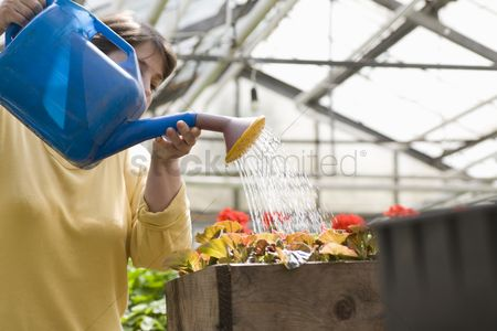 Greenhouse : Woman watering flowers in greenhouse