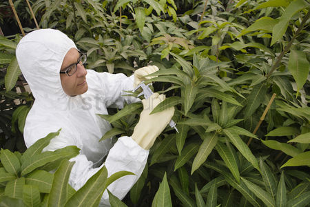 Greenhouse : Worker in protective suit measuring plants elevated view