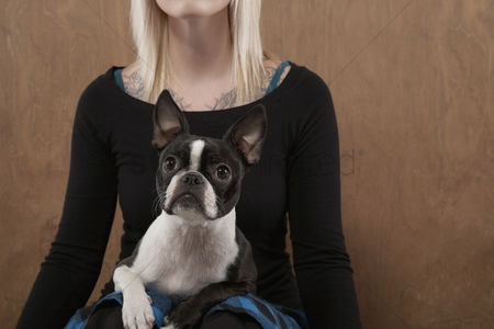 Bulldog : Young woman with french bulldog on lap mid section